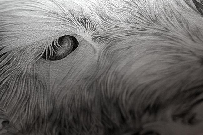 d_bambi2.jpg